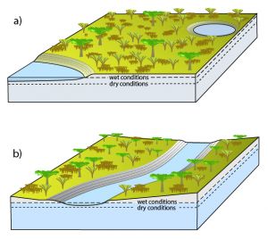 Figure 2. Schematic illustration of effects of changing water table in flat landscapes